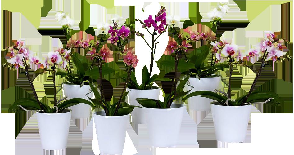 Горшечные цветы в подарок 14